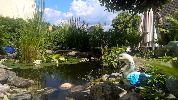 Schöner Garten, Teich