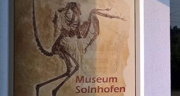 Museum von Solnhofen - Archaeopteryx